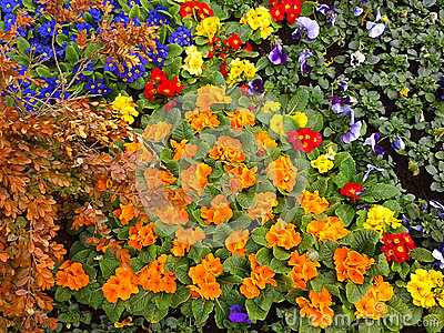 beautiful flowerbeds, city landscaping