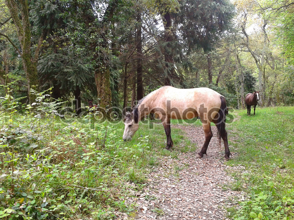horses in the forest, caucasian reserve